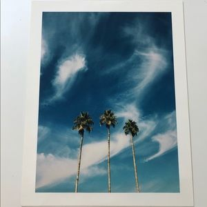 Other - 13x17 Palm Tree Print